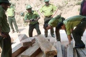 Khởi tố vụ phá rừng nghiêm trọng ở Phong Nha Kẻ Bàng