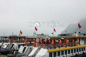 Clip, ảnh: Nghìn người đổ về hồ Hòa Bình tiêu dao sơn thủy