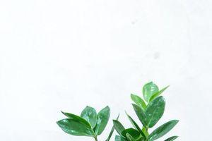 Tử vi: 12 con giáp nên trồng cây gì, đặt vị trí nào trong nhà để phát tài phát lộc?