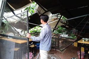 Hà Nội: Cây cổ thụ bất ngờ đổ sập xuống quán ăn, người dân hoảng loạn núp dưới gầm bàn cầu cứu