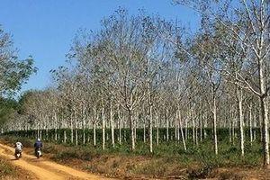 Cần xử lý nghiêm sai phạm trong vụ cấp sổ đỏ đất rừng ở Đắk Nông