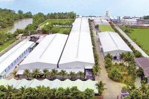 Sản phẩm dừa Vietcoco chinh phục thị trường thế giới