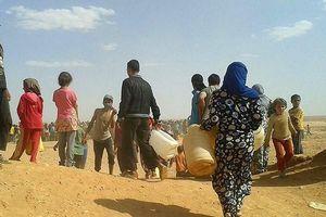 Nga: Mỗi ngày có khoảng 20 người chết tại trại tị nạn Al-Hawl ở Syria