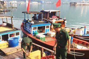 Bắt nhiều phương tiện sử dụng kích điện đánh bắt cá trên biển Đà Nẵng