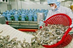 Mỹ công bố mức thuế 0% với 31 doanh nghiệp tôm của Việt Nam