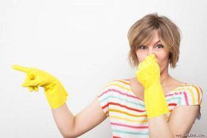 7 cách hay khử mùi nước đái chó mèo và mùi chuột chết hiệu quả