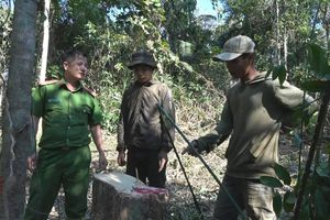 Phát hiện thêm một vụ phá rừng tại huyện Ea Kar