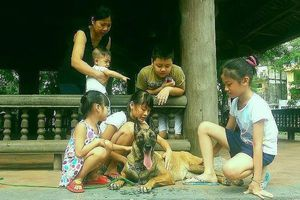 Vì sao chó hay cắn trẻ em?