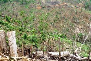 Bình Định: Khởi tố vụ án phá 11.300 m2 rừng tự nhiên