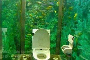 Nhà vệ sinh như thủy cung, khách hàng vào không muốn ra