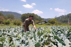 Lâm Đồng: Bùn thải gây ô nhiễm nguồn nước danh thắng quốc gia thác Prenn