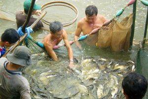 Mắm cá đồng U Minh Thượng