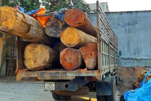 Bắt thêm xe chở gỗ lậu từ 'cổng trời' Đắk Long