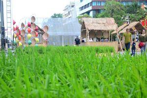 Người trẻ thích thú với khung cảnh làng quê giữa phố