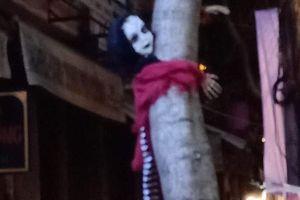 Nửa đêm ra đường, chàng trai đứng hình khi thấy vật thể lạ lơ lửng trên cây