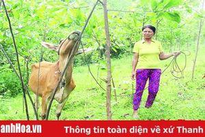Hiệu quả vay vốn để thoát nghèo ở khu vực miền núi
