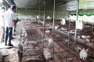 Khăn gói đi học chăn nuôi, trở về quê làm giàu trên vùng đất khô cằn