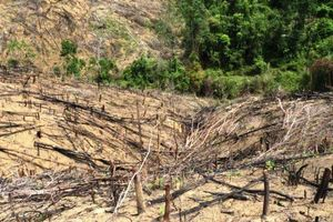 Bình Định: Khởi tố 2 cha con chặt phá 11.300m2 rừng tự nhiên
