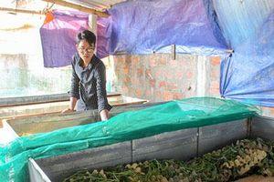 Quảng Trị: Trai trẻ nuôi con kêu ri ri, cắt cánh đi bán được 200 ngàn/ký