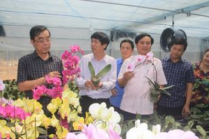 Quảng Trị: Trồng 13.000 cây hoa lan ở độ cao trên 1.000m