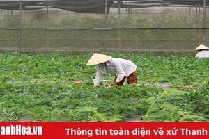 Huyện Nga Sơn: Huy động gần 179 tỷ đồng đầu tư xây dựng nông thôn mới
