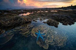 Ngăn chặn và bảo vệ các rạn san hô tự nhiên ở Hòn Yến (Phú Yên)
