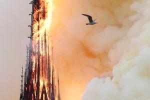'Nhà thờ Đức Bà là trái tim đang cháy của Paris'