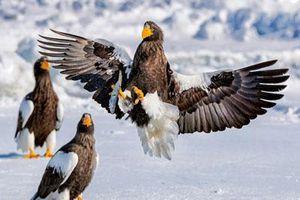 Ảnh động vật: Đại bàng săn cá, hải cẩu nằm lăn lóc...