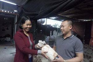 Hải Dương: Đi Đài Loan về trồng nấm ở phố núi, bỏ túi 300 triệu/năm