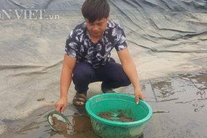 Ninh Bình: Cân cát lấy tiền, cứ 1 kg bán hơn 1 triệu đồng