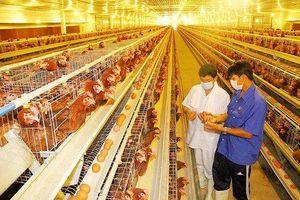 Gắn sản xuất với nhu cầu và yêu cầu của thị trường xuất khẩu