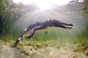 Cực 'độc' cá sấu săn mồi khét tiếng 'khai đao' giết con mồi