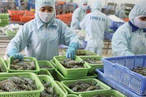 Nhờ CPTPP, tôm Việt Nam xuất khẩu sang Canada có nhiều lợi thế