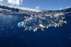 Nghiên cứu về sinh vật phù du trong 6 thập kỷ cho thấy rác thải nhựa tăng lên