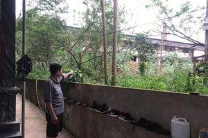 Thanh Hóa: Dân 'kêu cứu' vì nhà máy chế biến gỗ gây ô nhiễm môi trường