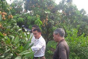 Chương trình mỗi xã một sản phẩm đóng góp quan trọng tái cơ cấu nông nghiệp