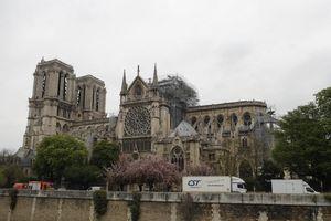 Dựng lại Nhà thờ Đức Bà Paris của thế kỷ 21