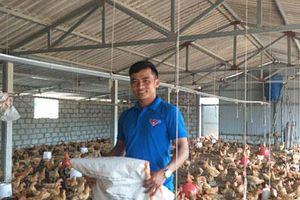 Hà Tĩnh: 9X thôi lang thang về làng nuôi bạt ngàn gà trên cát, lãi 25 triệu/tháng