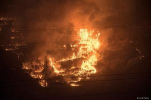 Hai sinh viên Italy bị phạt 27 triệu euro vì nướng thịt gây cháy rừng