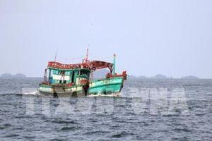 Bà Rịa-Vũng Tàu sớm lắp đặt giám sát hành trình tàu cá