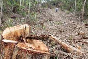 Đắk Lắk: Cần xử lý việc ô nhiễm do nước thải của nhà máy và rừng bị tàn phá tại huyện EaKar
