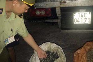 Gom hơn 1,3 tấn ốc nhập lậu từ Trung Quốc đưa vào tiêu thụ trong nội địa