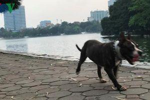Người Hà Nội vô tư huấn luyện chó dữ trong công viên