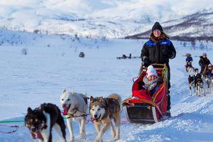 Hành trình vượt núi tuyết cùng chó kéo xe ở Bắc Cực thế nào?