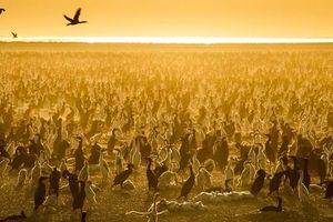 David Attenborough: Nhân loại cần đồng thuận chống biến đổi khí hậu