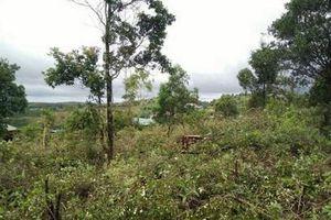 Đắk Nông: Khởi tố, bắt tạm giam nguyên trưởng phòng nông nghiệp huyện