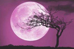 Tối nay Trăng hồng sẽ xuất hiện, nhưng nó có thật đúng như tên gọi?