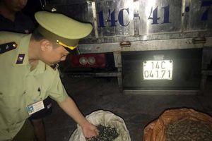 Quảng Ninh: Bắt giữ trên 1,3 tấn ốc nhập lậu