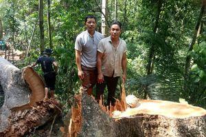 Xác định 02 đối tượng 'xẻ thịt' rừng phòng hộ Đắk Mi ở Quảng Nam