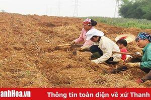 Toàn tỉnh có khoảng 6.000 tổ hợp tác dịch vụ nông nghiệp
